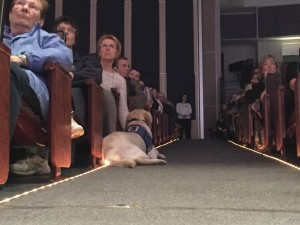 Service dog in the theater. Photo by Yining Chen.